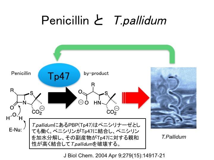 penicillinctp47