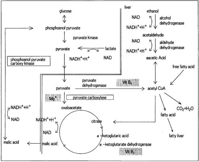 エタノール(エチルアルコール)とは - 石鹸百科